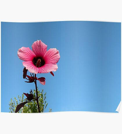 A Single Pink Flower Poster