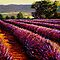 French Provençal Lavender Afternoon by sesillie