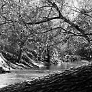 Bluegrass Creek River by Perspective