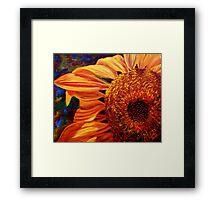 Sunlight on the Sunflower Framed Print