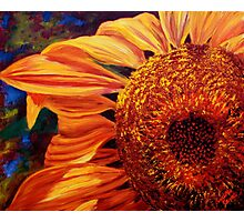 Sunlight on the Sunflower Photographic Print