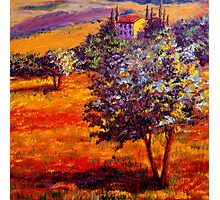Hot Summer in the Olive Grove Photographic Print