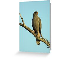 Dark Chanting Goshawk Greeting Card