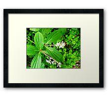 Caterpillar In The Green Framed Print