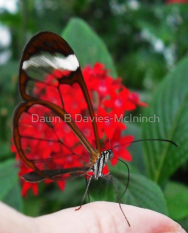 Red Glass by Dawn B Davies-McIninch