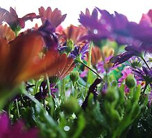 Spring Flowers by Gilda Axelrod
