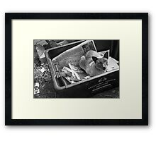 the recycling cat Framed Print