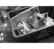 the recycling cat Photographic Print