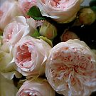 Pink Summer Roses by Barbara Wyeth