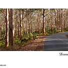 Boranup Drive ~ Caves Road  by Diana Sénèque