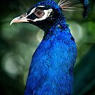 Head of the Peacock by photograham