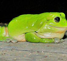 Phatt Frog by beachut
