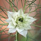 Love-in-a-mist by John Keates