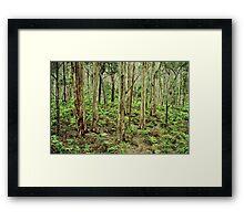 boranup forest 2 Framed Print