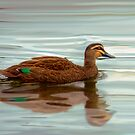 Ducks - Smooth Sailing by Mark Richards