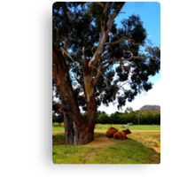 It's as simple as cows under a tree. Canvas Print