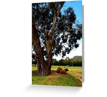 It's as simple as cows under a tree. Greeting Card