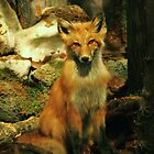 Fox by James  Birkbeck Animals