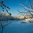 First Snowfall-Lancaster County, Pennsylvania by BigD