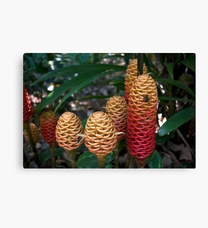 Beehive Ginger Cluster Canvas Print