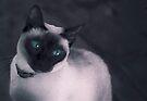 Cleo cool cat by Juilee  Pryor