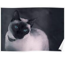 Cleo cool cat Poster