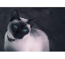 Cleo cool cat Photographic Print