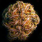 Feather Star Ball by gardenofbeeden