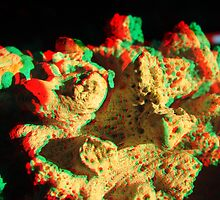 Coral 3D (Macro) by Andreas Altmann