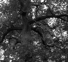 Spooky Woods by Ryan Davison Crisp