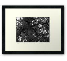Spooky Woods Framed Print
