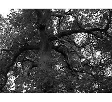 Spooky Woods Photographic Print