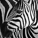 Natures graphic design by Matthew Bonnington