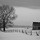 One House One Tree by Kerri Gallagher