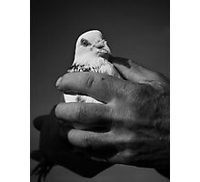 A Bird in the Hand... Photographic Print