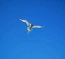 bird by rondinara