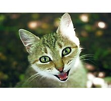 smile of cat  Photographic Print