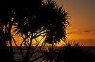 Daylight on Another Day - Caloundra by Barbara Burkhardt