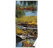 Algonquin Provincial Park Wetlands Poster