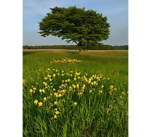 Day Lilies in a Meadow of an Old Homestead Photographic Print
