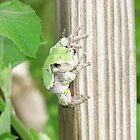 Tree Frog Release by TabiButterfli