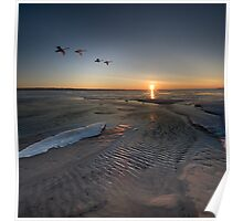 Swans Fly Along Little Traverse Bay Poster