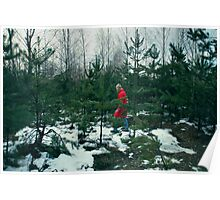 walk in-field among fir-trees Poster