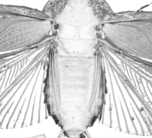White Moth Sticker
