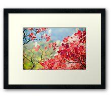 Pink branch - grace Framed Print