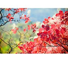 Pink branch - grace Photographic Print