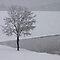 Winter Wonderland Snow and Ice