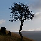 One Tree Hill by marc melander