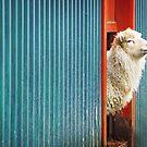 A Sheep Named DJ by Lasse Damgaard