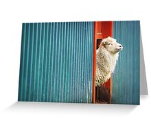 A Sheep Named DJ Greeting Card